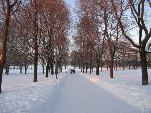 Walking in a snow covered park