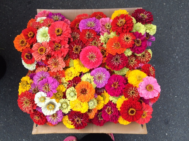 Beautiful colorful flowers in a box