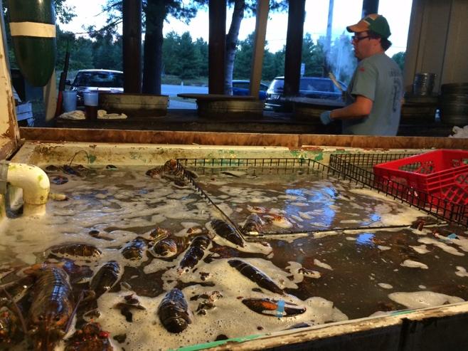 Bar harbor lobster pound