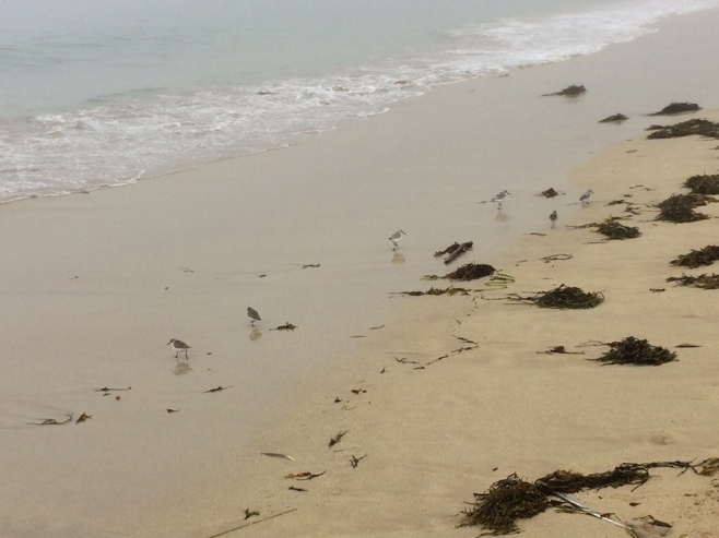 Small birds on sand beach