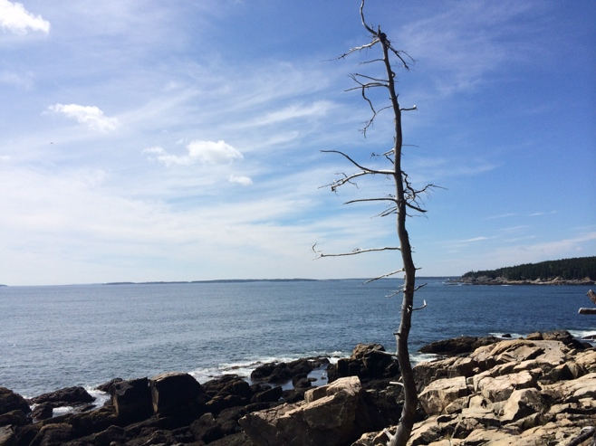 Lone tree by the edge of cliff