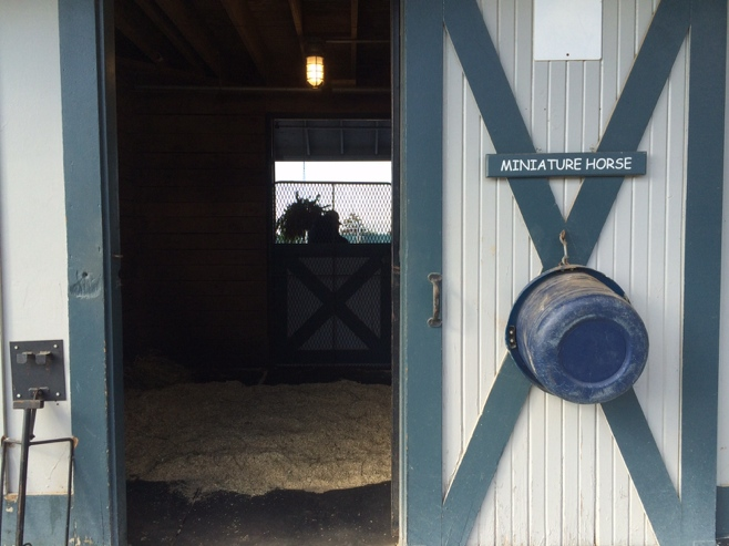 Miniature horse stable