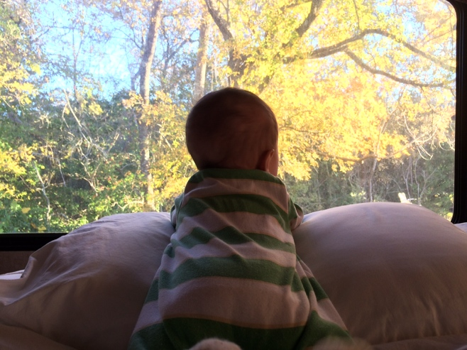 Baby on front looking at trees