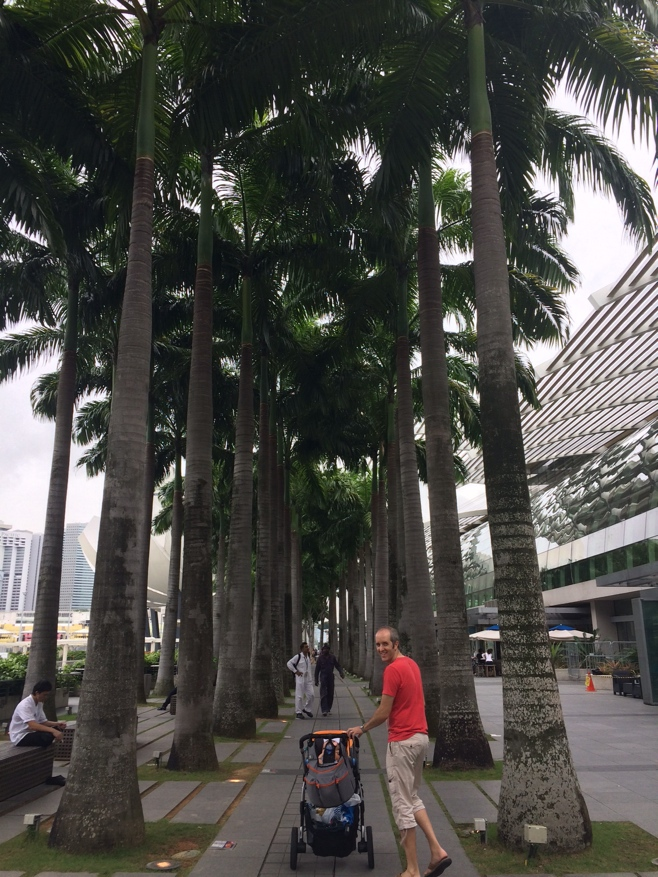 Walking through row of palm trees
