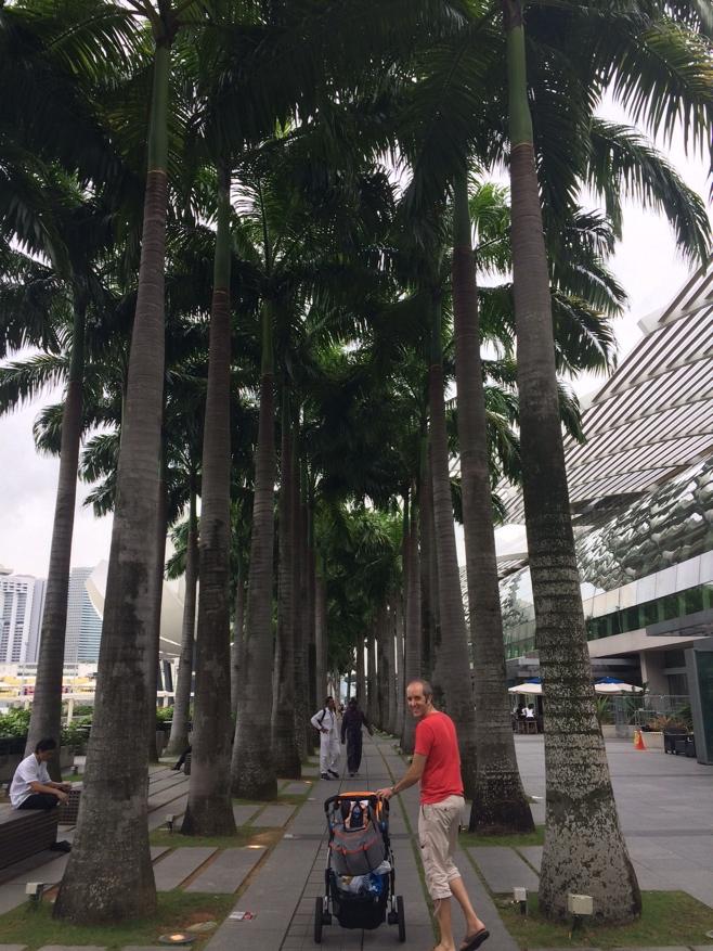 Walking through row of palm trees