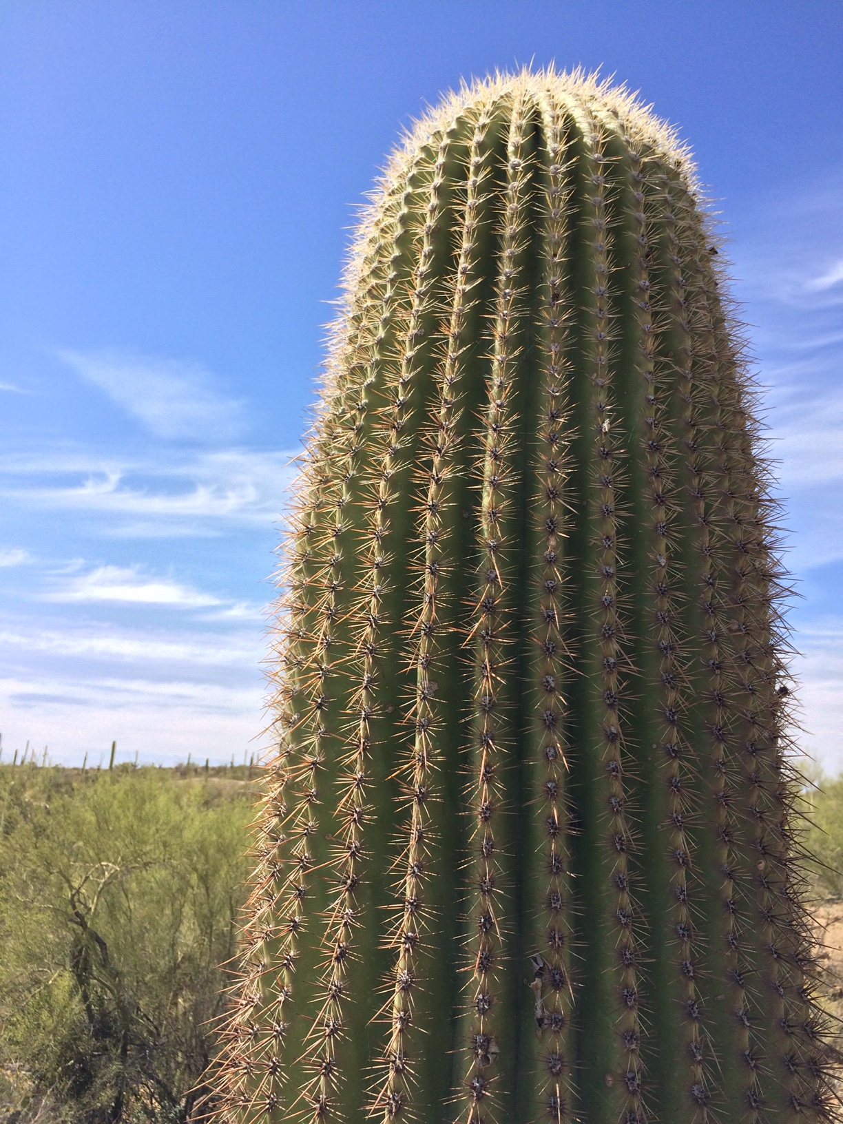 Up close cacti