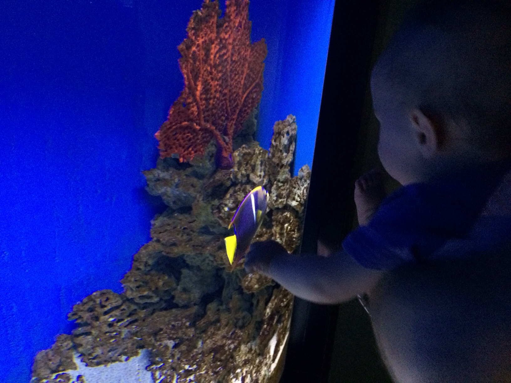 Baby boy o looking at fish