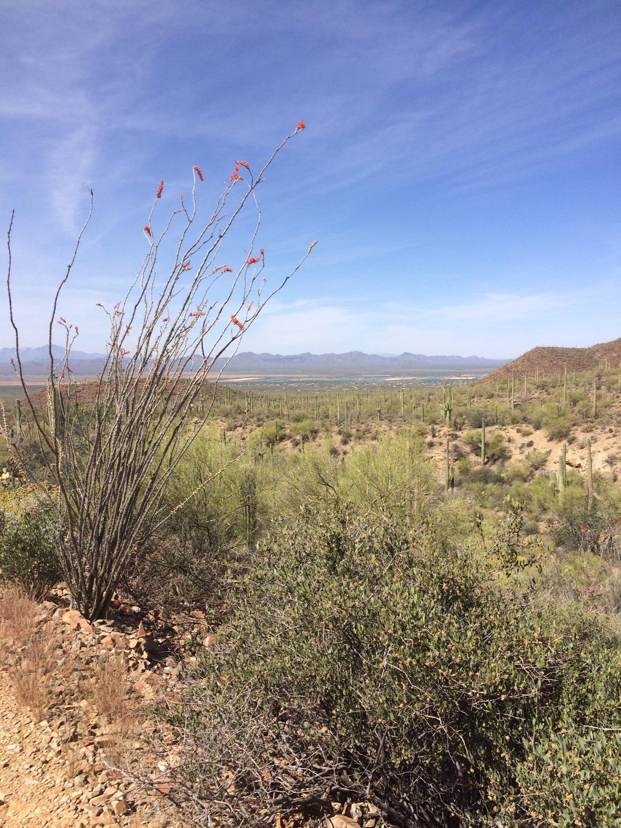 Kings canyon desert view