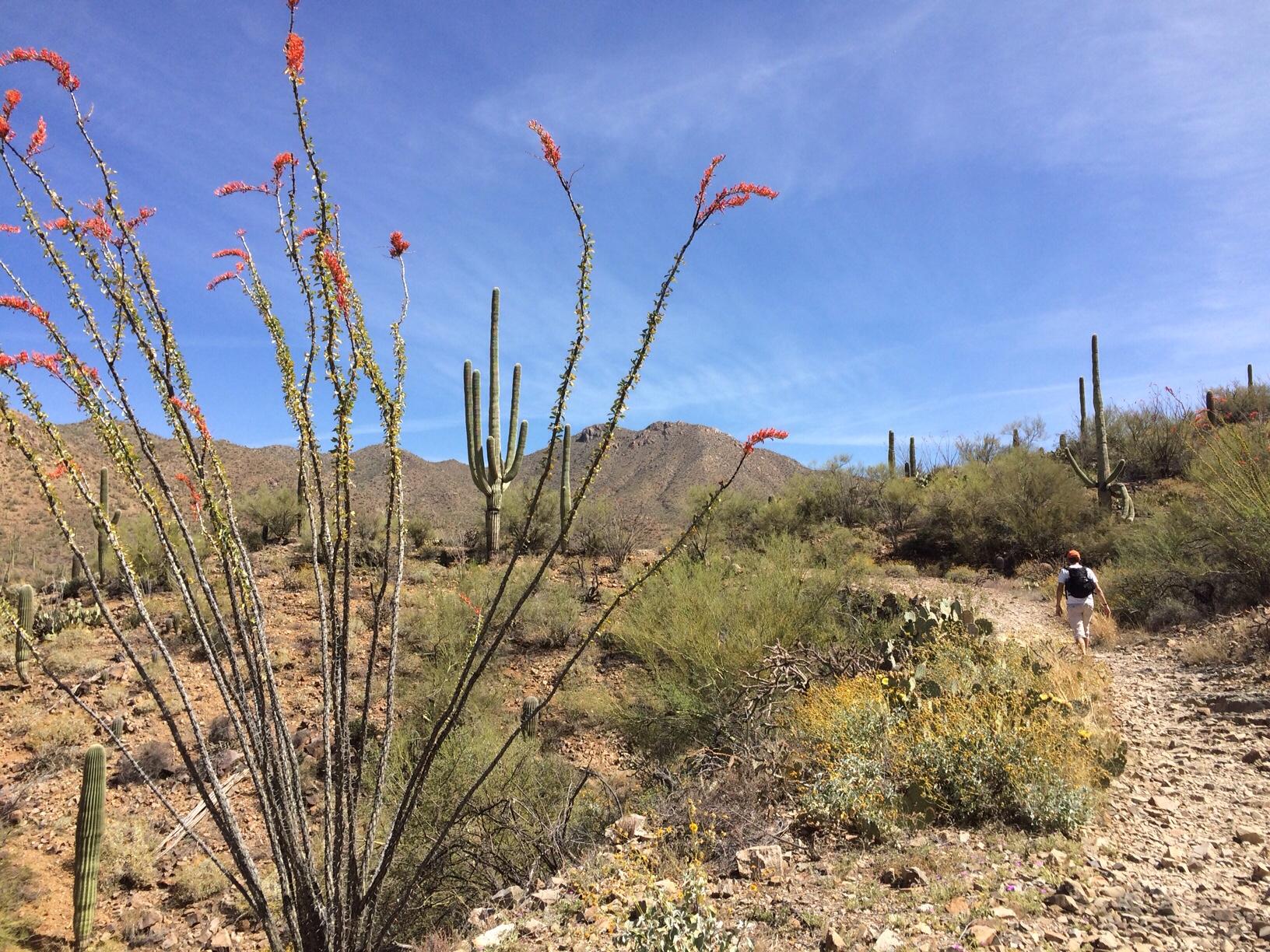 English hubby hiking ahead in the desert