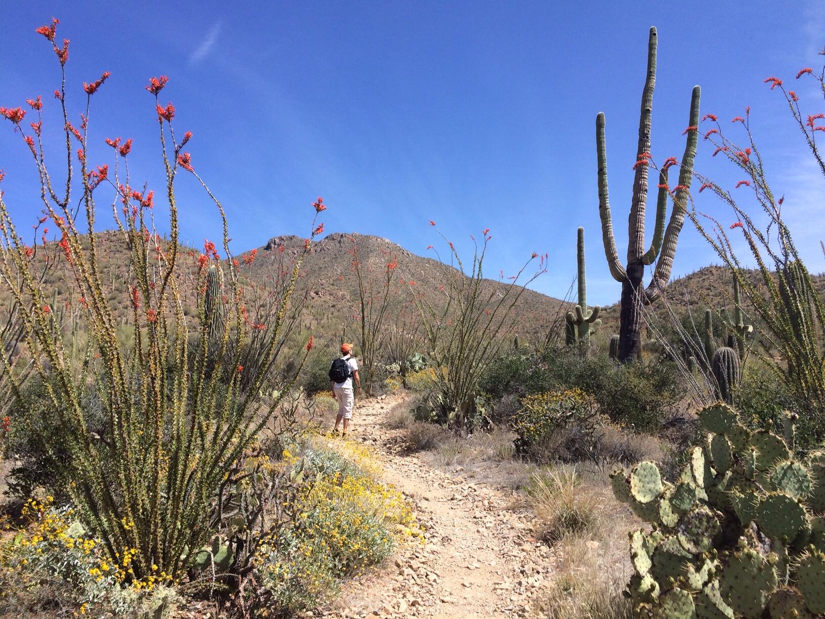English hubby hiking on kings canyon trail