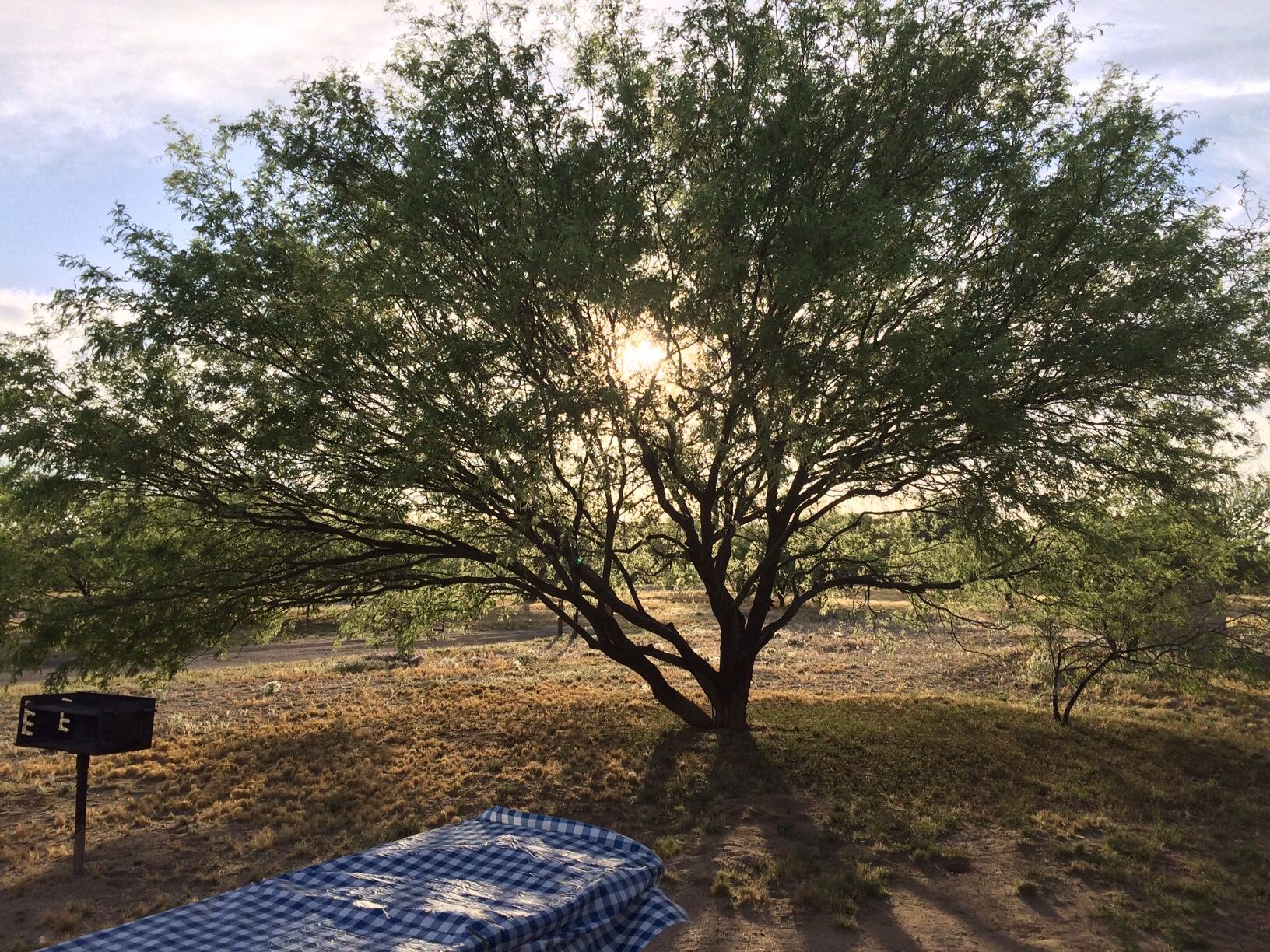 Sun setting through the tree