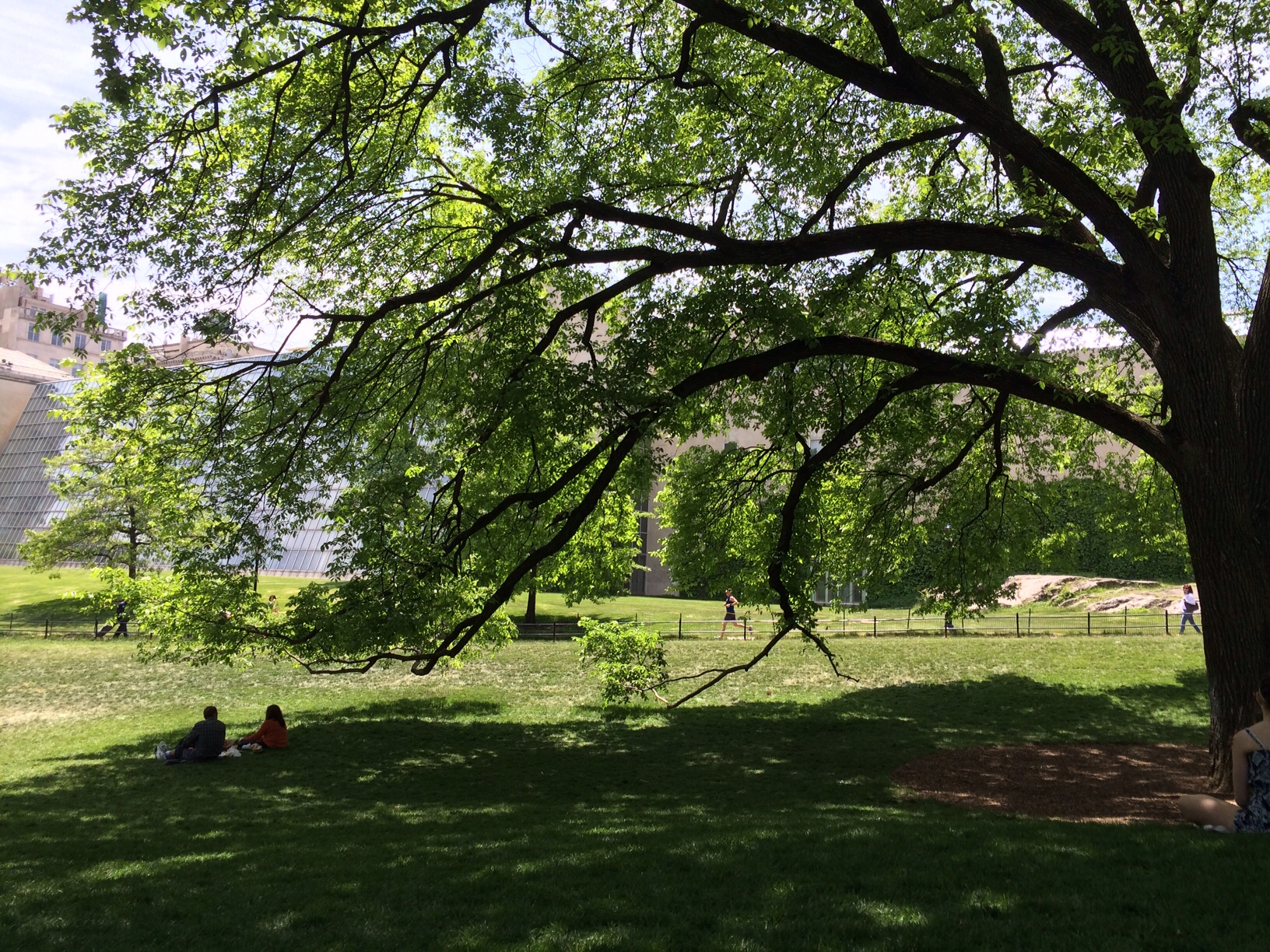 Central Park near met